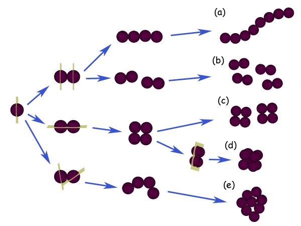 Arrangement of Cocci