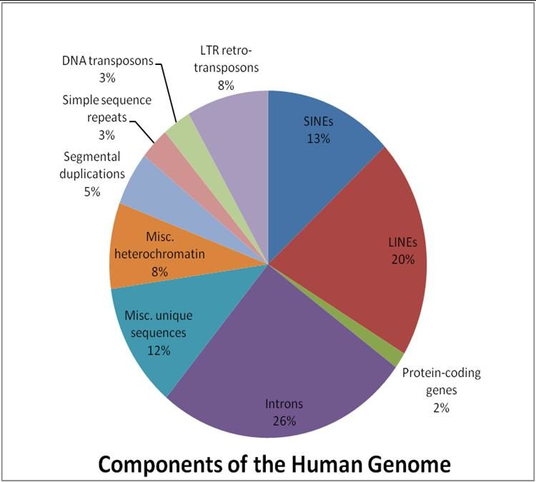 Components-of-the-Human-Genome