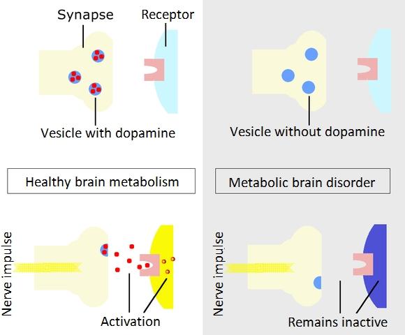 Dopaminstoffwechselenglish