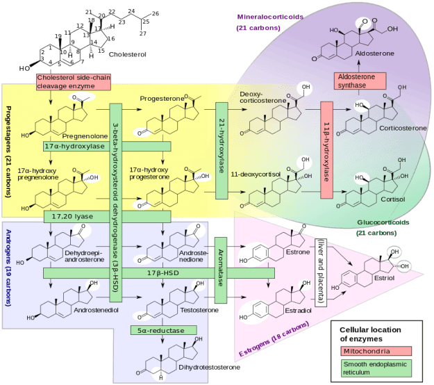 Enzymes, their cellular location, substrates and products in human steroidogenesis