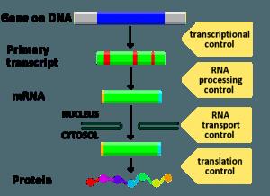 Gene expression control