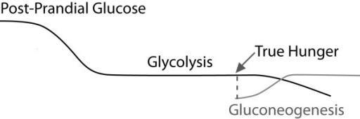 The Glucose Response Curve