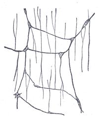Submucous plexus enteric ganglion nerve tissue