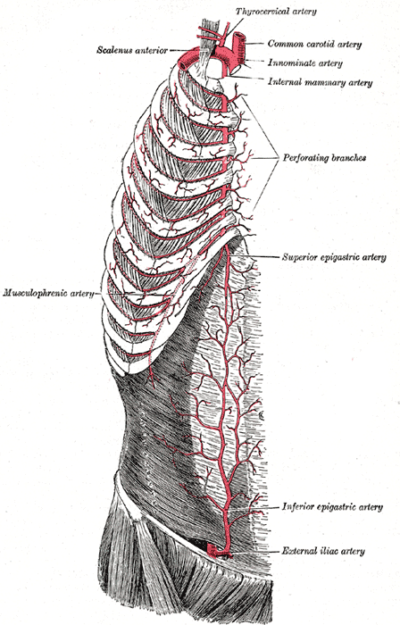 Internal thoracic artery Gray 522
