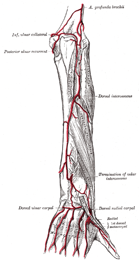 Arteries Of The Upper Limb The Lecturio Medical Online Library