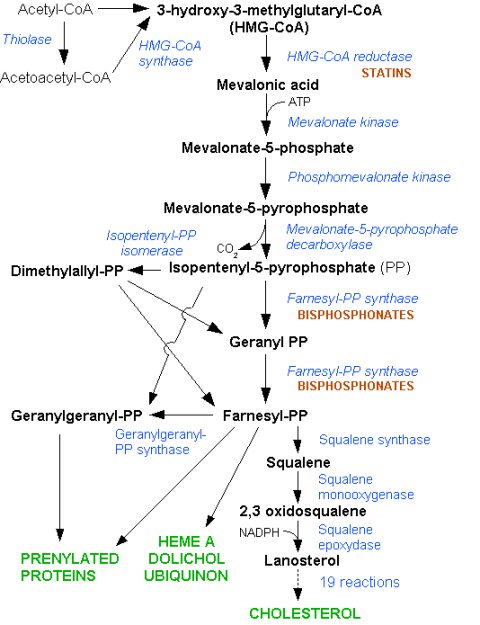 HMG-CoA reductase pathway (cholesterol)