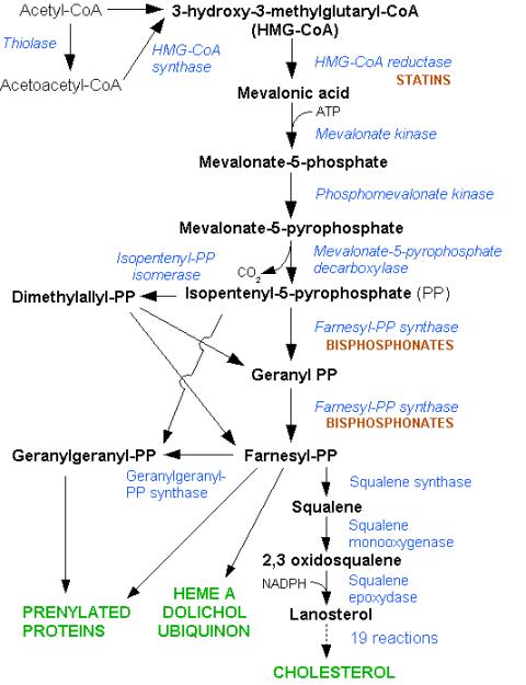 HMG-CoA reductase pathway (cholesterol)