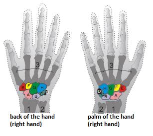 Wrist scheme