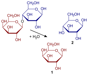 Hydrolysis of lactose