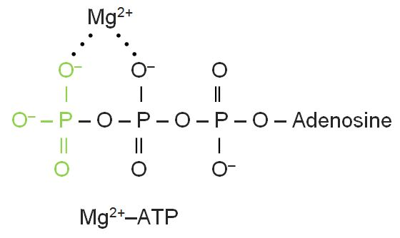 Magnesium-ATP Complex