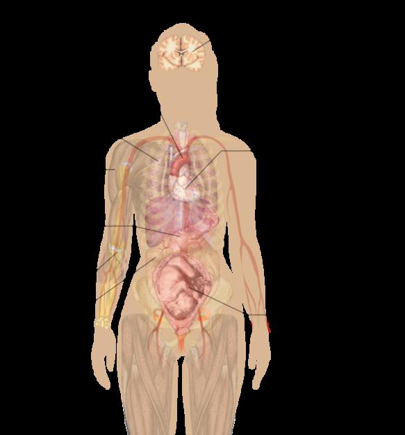 Main side effects of nicotine