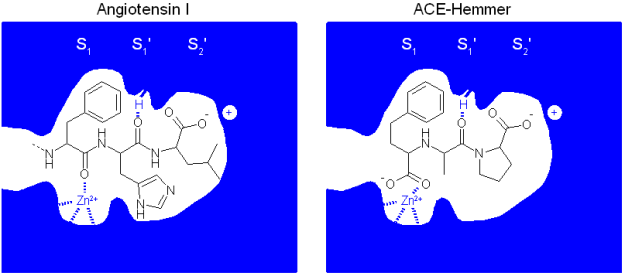 Molecular mechanism of action of ACE inhibitors