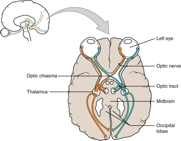 Optic nerve vs optic tract