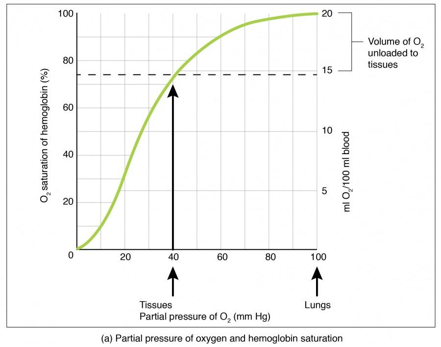 Oxygen-hemoglobin Dissociation