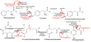 Pathophysiology_of_metabolic_disorders_of_phenylalanine_and_tyrosine