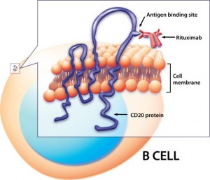 Computer-generated illustration of Rituximab binding to CD20 protein on B cell