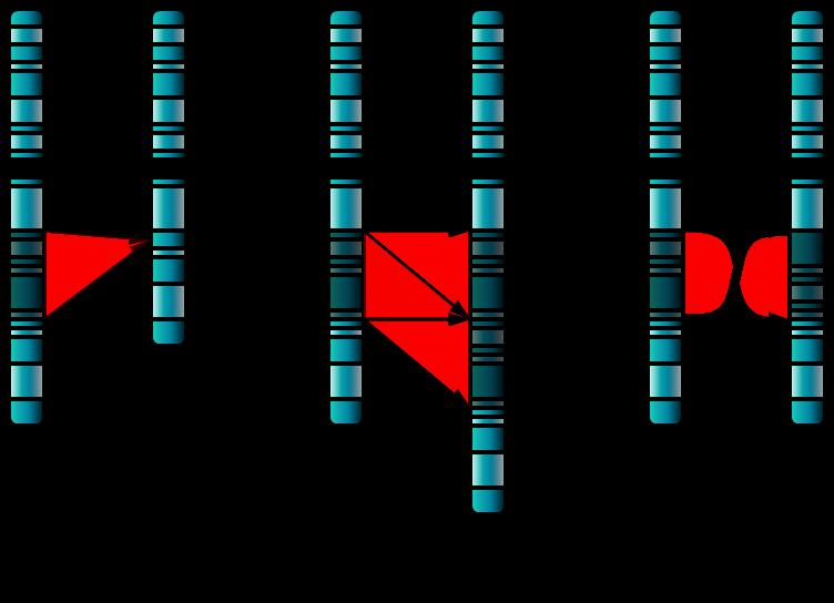 Single Chromosome Mutations