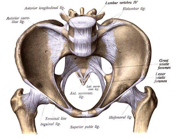 Lesser sciatic foramen