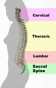 Spinal-column-curvature