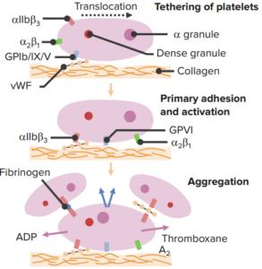 adp-inhibitors