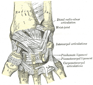 Ligaments of wrist – anterior view
