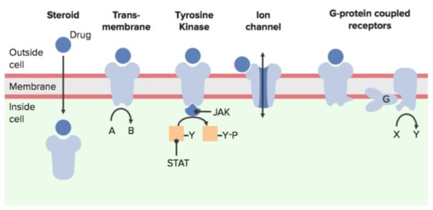 basic types of transmembrane receptors