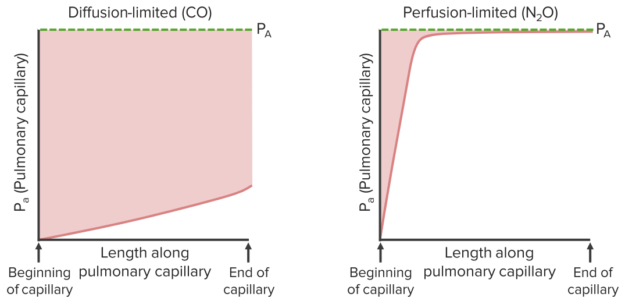 diffusion-perfusion-limited-gases