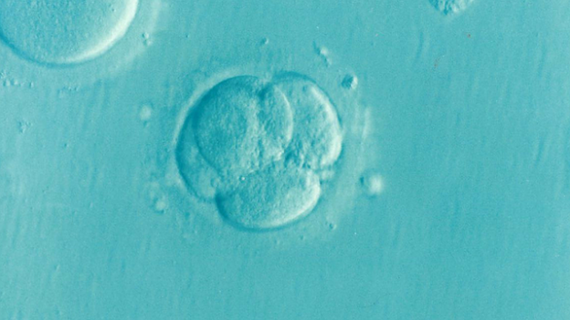 embryo-1514192_640