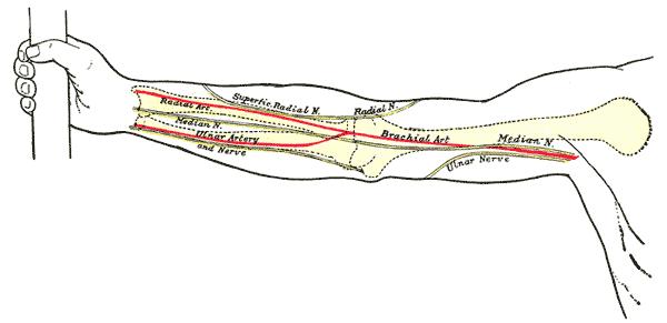 epicondylus medialis
