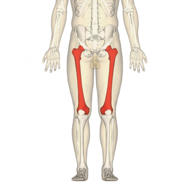 femurs Location