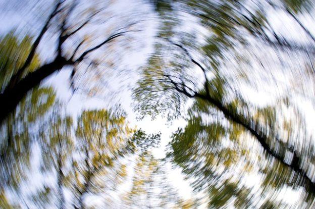 forest-dizziness