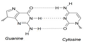 hydrogen-bond2