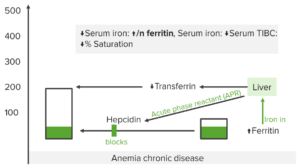 iron-studies-anemia-of-chronic-disease