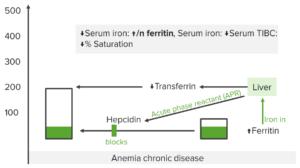 iron-studies-anemia-of-chronic-disease