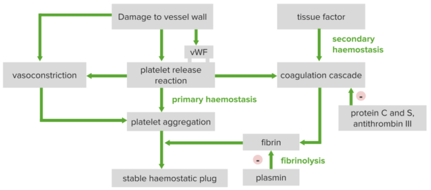 overview of hemostasis thrombosis