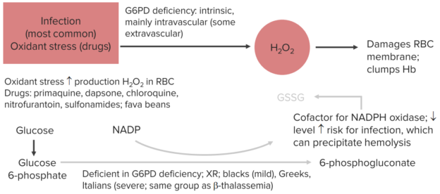 pathophysiology-of-g6pd-deficiency