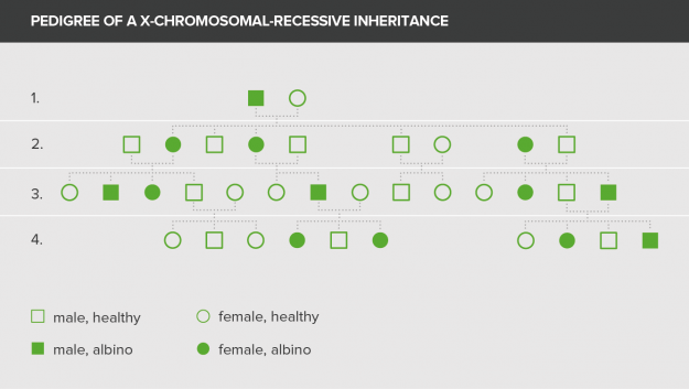 pedigree of a x-chromosomal-dominant inheritance