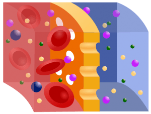 schema of a semipermeable membrane