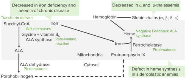 sideroblastic-anemia