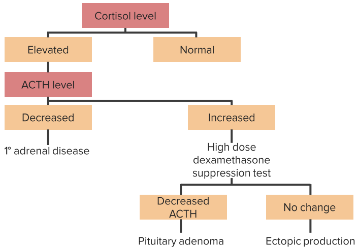 stepwise approach to diagnose cushings syndrome