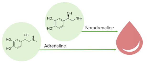 noradrenaline and adrenaline