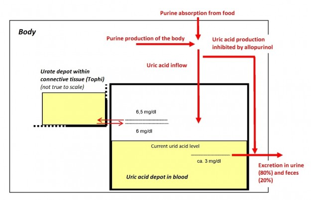 uric acid english